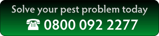 To solve your pest problem call 01306 771743